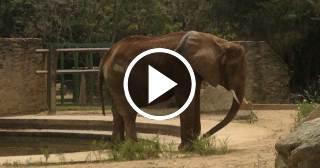 Elefanta Ruperta se convierte en símbolo de la desnutrición en Venezuela