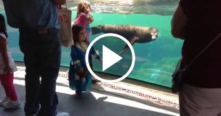 Un lobo marino tiene una curiosa reacción cuando ve a una niña caerse