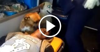 La fidelidad de dos perros con su dueño herido en una ambulancia