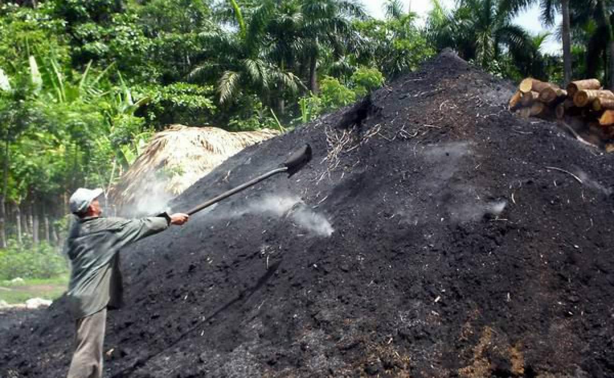 Empresa cubana cierra nuevo acuerdo para vender carbón vegetal en EE.UU.