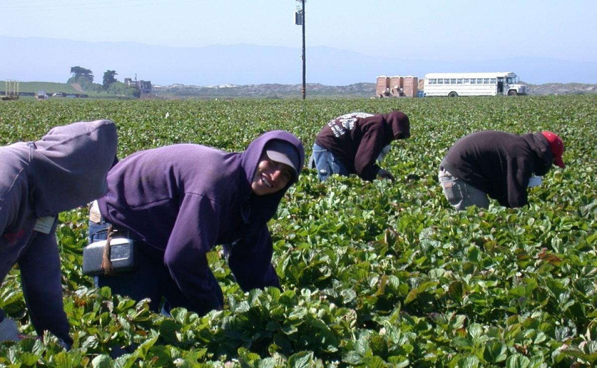"""Impulsan en EEUU la llamada """"Blue Card"""", especie de residencia para trabajar en la agricultura"""