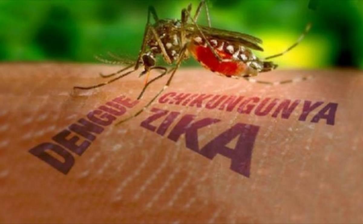 Personas que han padecido el dengue se comportan diferentes frente al virus Zika