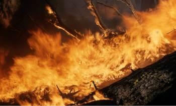 """Una """"quema de libros"""" en el jardín de una casa provoca un grave incendio forestal en Florida"""