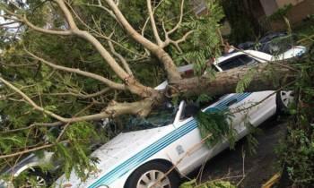 Florida intenta recomponerse, mientras se eleva a 10 la cifra total de muertos por Irma en EE.UU.