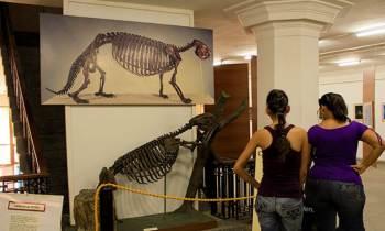 El Museo de Historia Natural de Cuba y de París firman un convenio de colaboración