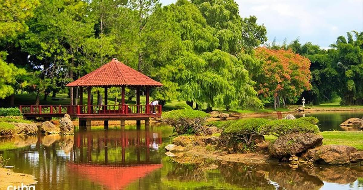 El jard n bot nico nacional de cuba for Informacion sobre el jardin botanico